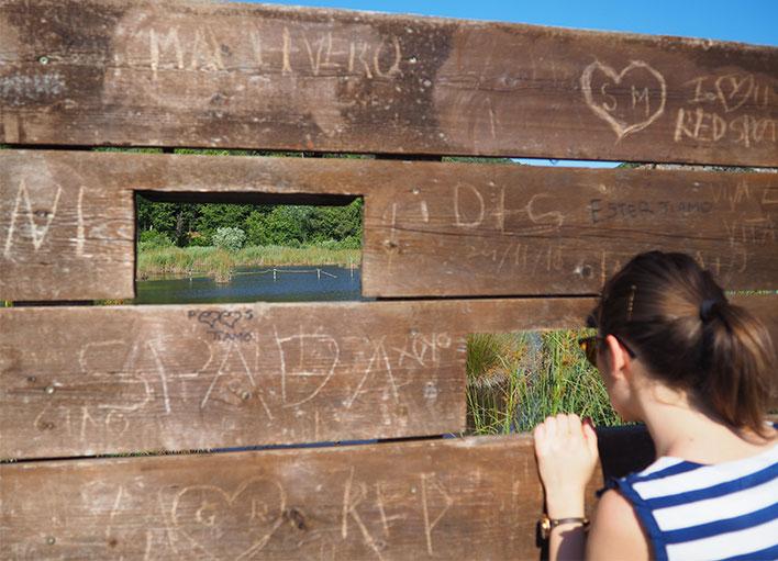 Birdwatching sul Lago di Massaciuccoli