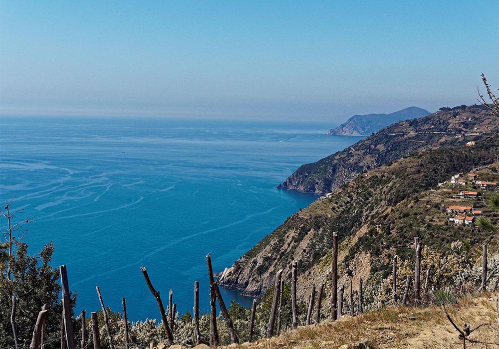 Vigneti di Liguria, terrazzati e a picco sul mare