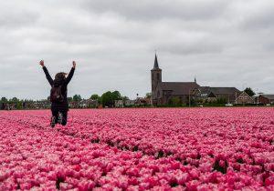 Lisse, la città dei tulipani